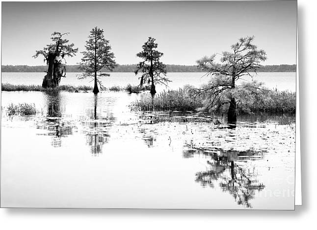Lilly Pads Greeting Cards - Isle of Peace - North Carolina Greeting Card by Dan Carmichael
