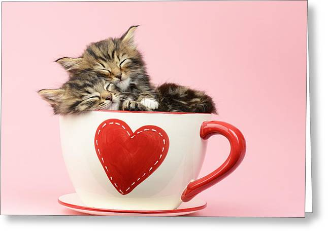 Tabby Greeting Cards - It Must Be Love Greeting Card by Greg Cuddiford