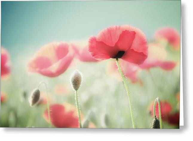 Canvas Wrap Greeting Cards - Its a New Day Greeting Card by Amy Tyler