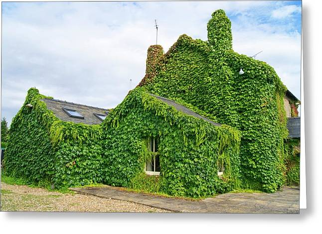 Ivy Growth On A Building Greeting Card by Mark Williamson