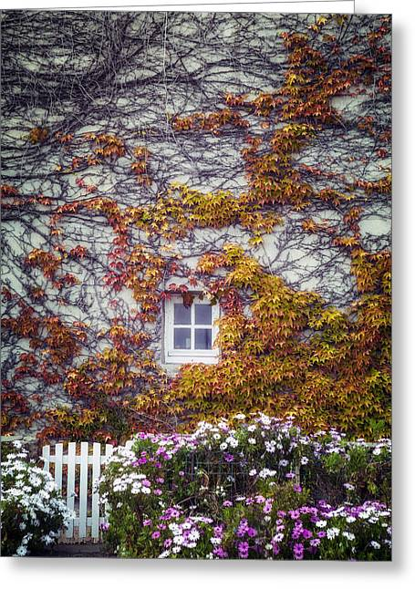 Overgrown Photographs Greeting Cards - Ivy House Greeting Card by Joana Kruse