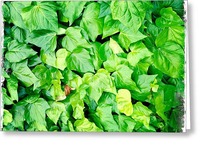 Lush Colors Greeting Cards - Ivy Greeting Card by Les Cunliffe