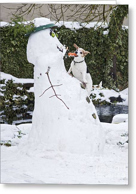 Sneaky Greeting Cards - Jack Russell Stealing Carrot Greeting Card by Brian Bevan