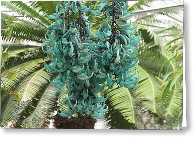Strongylodon Macrobotrys Greeting Cards - Jade Vine In Blooms Greeting Card by Alfred Ng