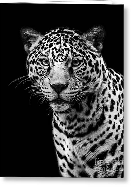 Jaguars Greeting Cards - Jaguar two Greeting Card by Ken Frischkorn