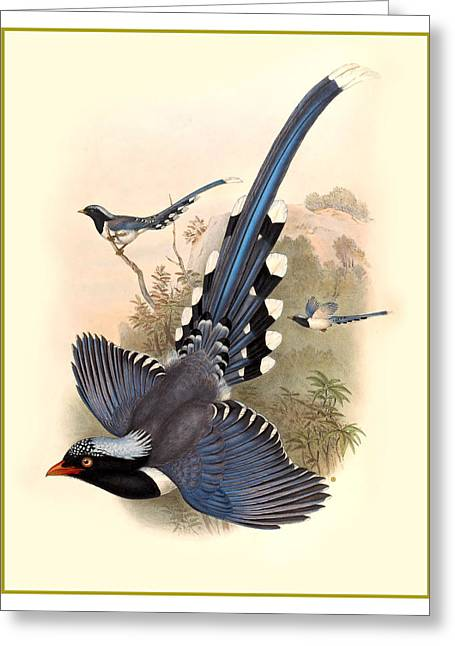 Antique Digital Greeting Cards - John Gould Birds Greeting Card by Gary Grayson
