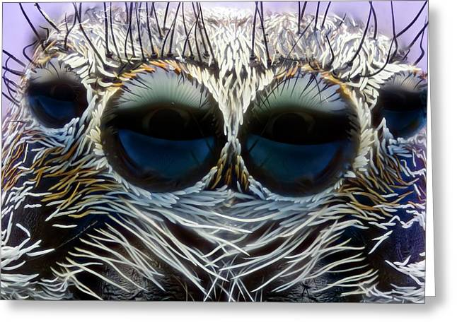 Jumping Spider Head Greeting Card by Nicolas Reusens
