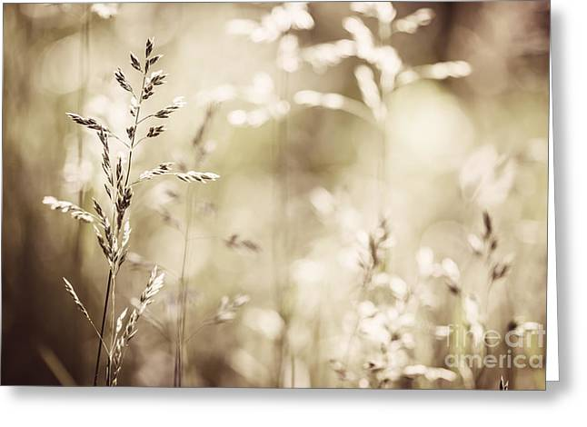 Grass Greeting Cards - June grass flowering Greeting Card by Elena Elisseeva