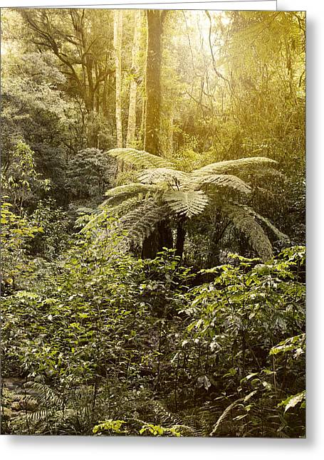 Tropical Photographs Greeting Cards - Jungle light Greeting Card by Les Cunliffe