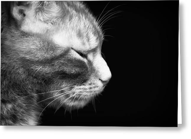 Catnap Greeting Cards - Just a Catnap Greeting Card by Mountain Dreams