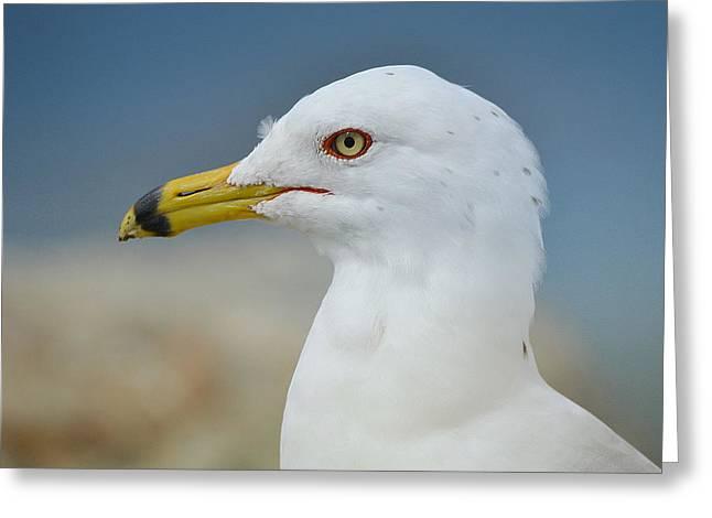 Ring-billed Gull Greeting Cards - Just A Gull Greeting Card by Fraida Gutovich