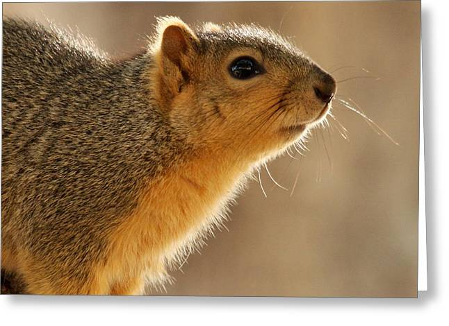 Fox Squirrel Greeting Cards - Just Curious Greeting Card by Bob and Jan Shriner