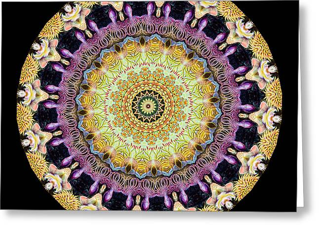 Best Sellers -  - Biology Greeting Cards - Kaleidoscope Ernst Haeckl Sea Life Series Greeting Card by Amy Cicconi