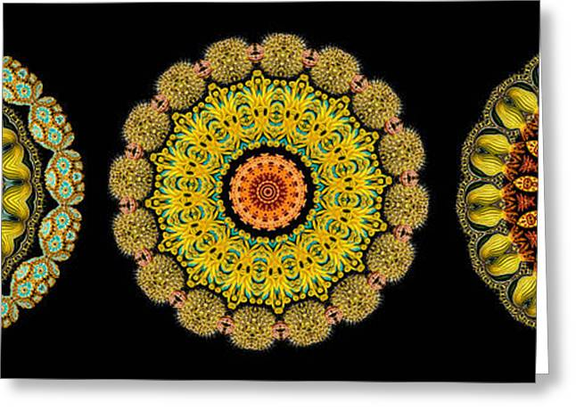 Biology Greeting Cards - Kaleidoscope Ernst Haeckl Sea Life Series Triptych Greeting Card by Amy Cicconi