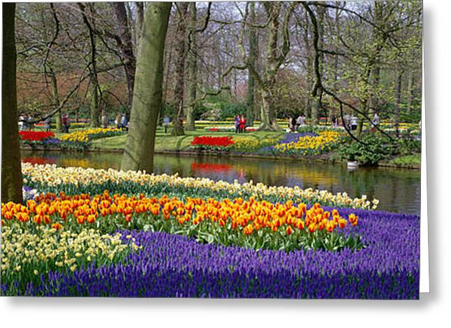 Grape Hyacinths Greeting Cards - Keukenhof Garden Lisse The Netherlands Greeting Card by Panoramic Images