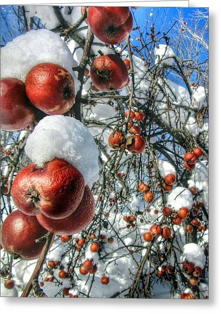 Recently Sold -  - Winter Storm Greeting Cards - Forgotten Fruit Greeting Card by Scott Wendt Tom Wierciak