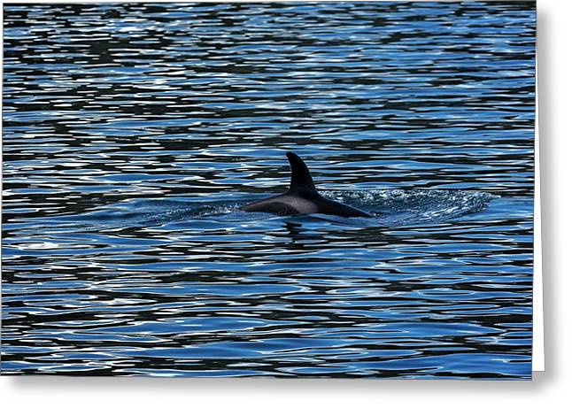 Killer Whale Or Orca, Orcinus Orca Greeting Card by Macduff Everton