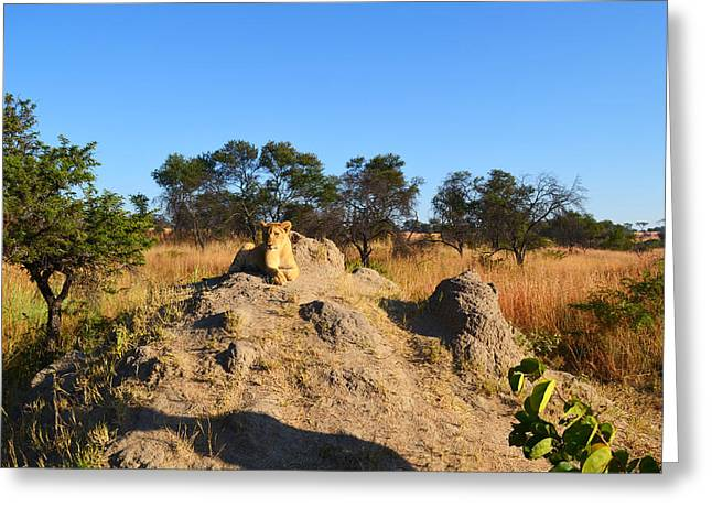 Zimbabwe Greeting Cards - King of the Hill Greeting Card by Mountain Dreams