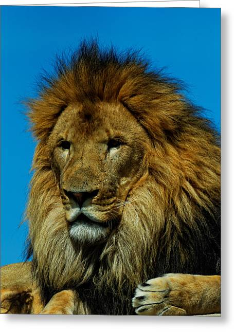 Lions Den Greeting Cards - King of the Jungle Greeting Card by Jonathan Davison