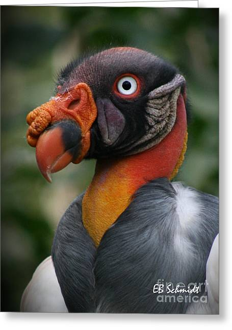 Mayan Mythology Greeting Cards - King Vulture Greeting Card by E B Schmidt