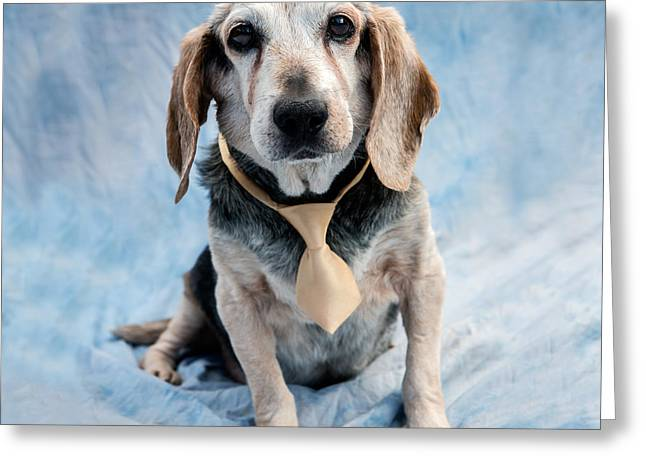 Editorial Greeting Cards - Kippy Beagle Senior and Best Dog Ever Greeting Card by Iris Richardson