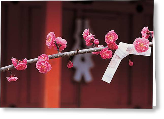 Flower Blooms Greeting Cards - Kitano Tenmangu Kyoto Japan Greeting Card by Panoramic Images