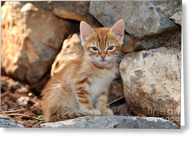 Trip Greeting Cards - Kitten in Hydra island Greeting Card by George Atsametakis