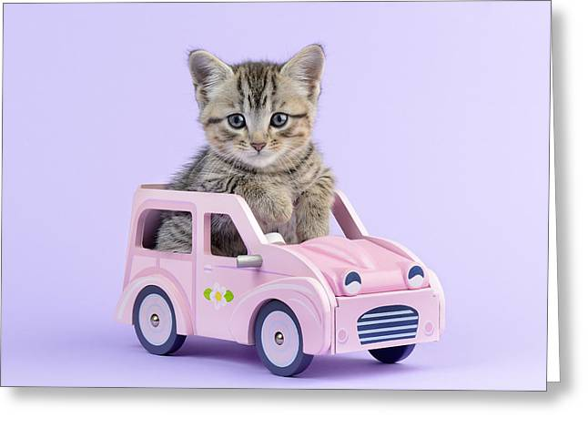 Kitten In Pink Car Greeting Card by Greg Cuddiford