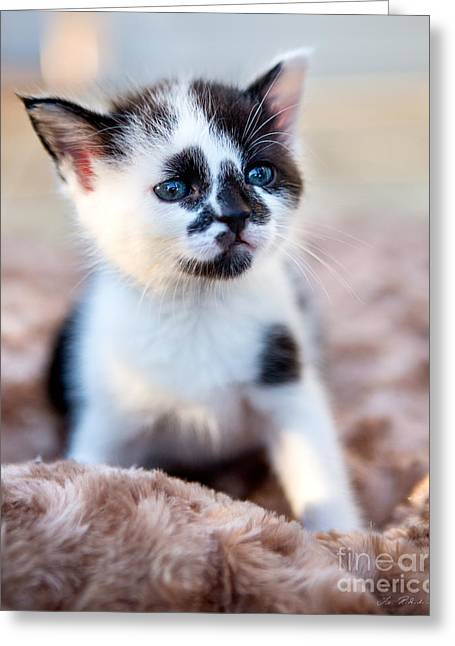 Owner Greeting Cards - Kitten thinking Greeting Card by Iris Richardson