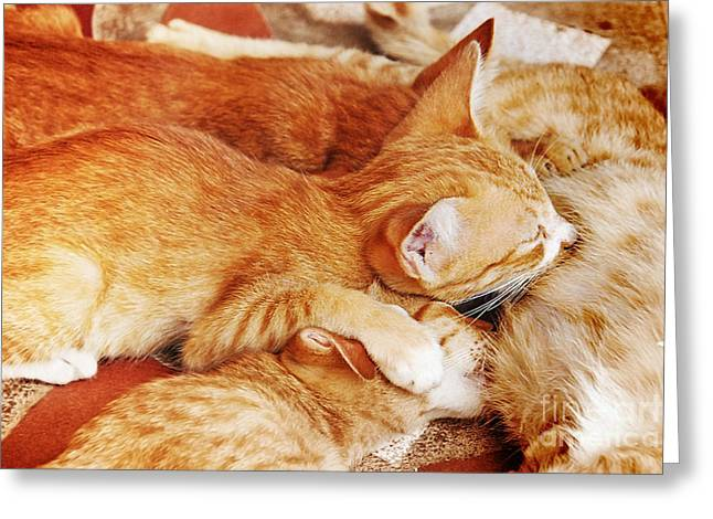 Caring Mother Greeting Cards - Kittens having breast feed by her mum Greeting Card by Jeng Suntorn niamwhan