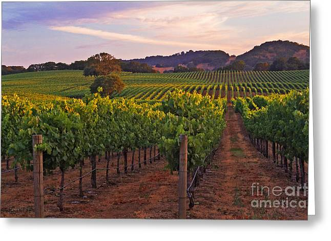 Calistoga Greeting Cards - Knights Valley Summer Solstice Greeting Card by Charlene Mitchell