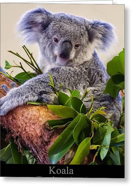 Koala Digital Greeting Cards - Koala Greeting Card by Chris Flees