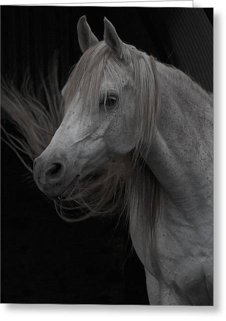 Dressage Photographs Greeting Cards - Labor Of Love Greeting Card by Odd Jeppesen