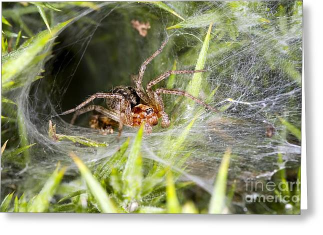 Spun Web Greeting Cards - Labyrinth Spider Greeting Card by Dr. Keith Wheeler