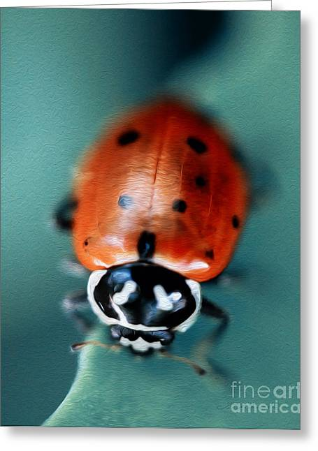 Insect Control Greeting Cards - Ladybug on Green Leaf Greeting Card by Iris Richardson