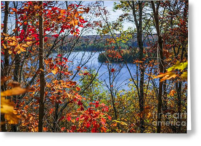 Lookout Greeting Cards - Lake and fall forest Greeting Card by Elena Elisseeva