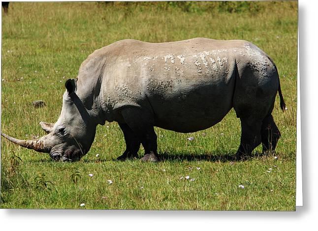 Rhinoceros Greeting Cards - Lake Nakuru White Rhinoceros Greeting Card by Aidan Moran