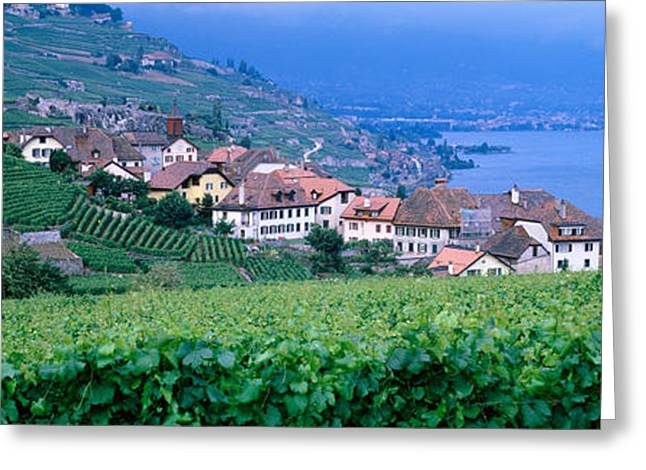 Pastoral Vineyard Greeting Cards - Lake Of Geneva, Vineyards, Rivaz Greeting Card by Panoramic Images