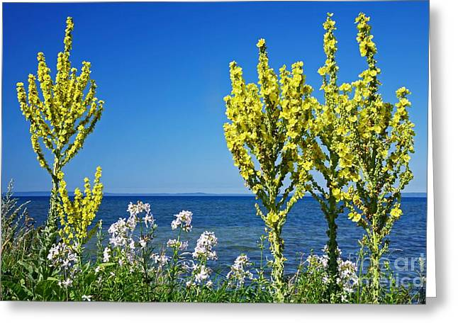 Babys Breaths Greeting Cards - Lake-side Flowers Greeting Card by Bjorn Svensson