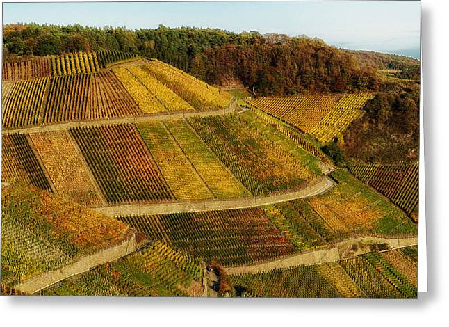 Trellis Greeting Cards - Land of the Grape Greeting Card by Mountain Dreams