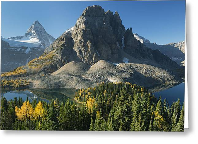 Pinaceae Greeting Cards - Larch Trees Mt Assiniboine And Sunburst Greeting Card by Kevin Schafer
