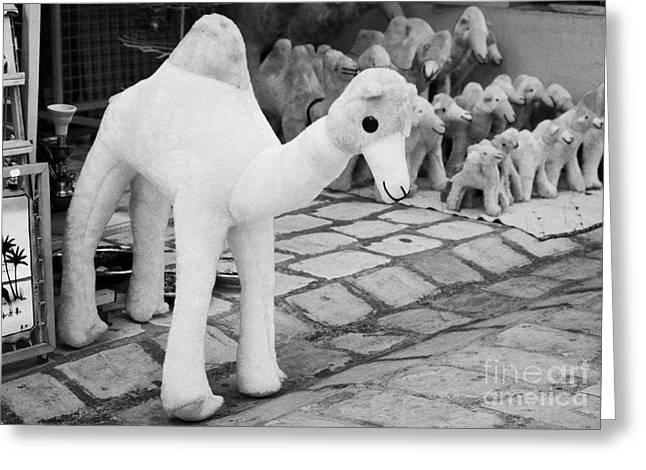 Toy Shop Greeting Cards - Large Soft Toy Stuffed Camel Souvenir At Market Stall In Nabeul Tunisia Greeting Card by Joe Fox