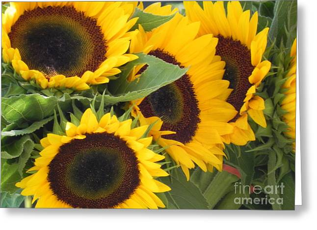 Yellow Sunflower Greeting Cards - Large SunFlowers Greeting Card by Chrisann Ellis