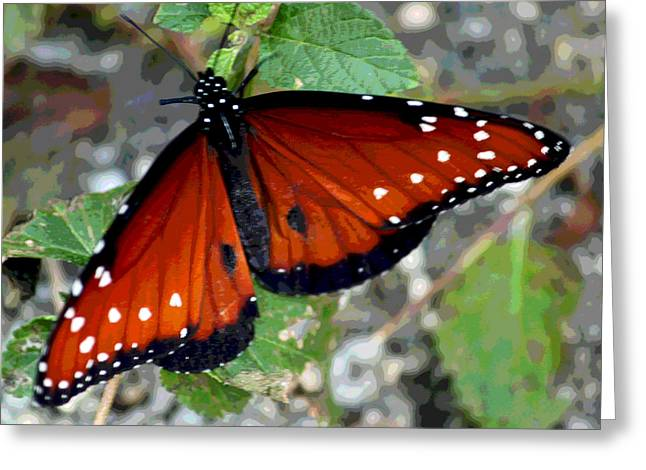 Floral Digital Art Greeting Cards - Last Butterfly of the Season Greeting Card by Suzanne Gaff