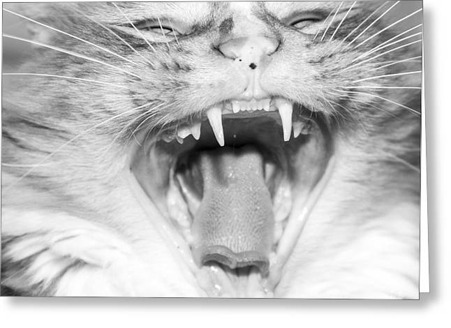 Hysterical Greeting Cards - Laughing Cat Greeting Card by Jeannette Hunt