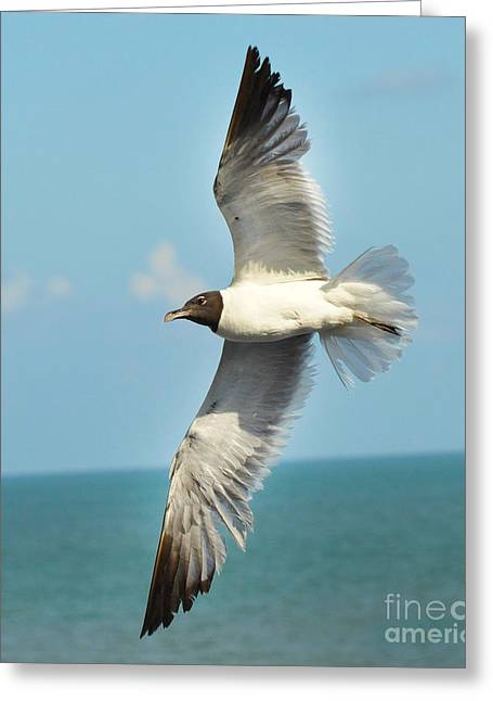 Dogwood Silhouette Greeting Cards - Laughing Gull Greeting Card by Stuart Mcdaniel