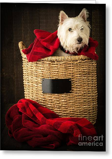 Westie Pup Greeting Cards - Laundry Day Greeting Card by Edward Fielding