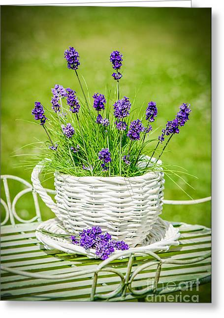 Flowerpots Greeting Cards - Lavender Greeting Card by Amanda And Christopher Elwell
