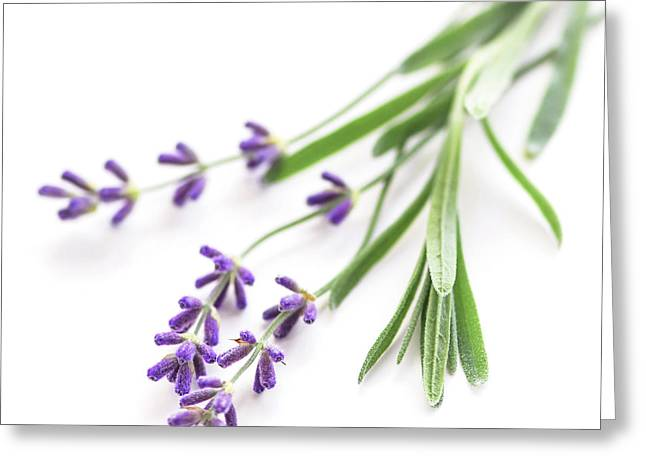 Medicinal Greeting Cards - Lavender Greeting Card by Elena Elisseeva