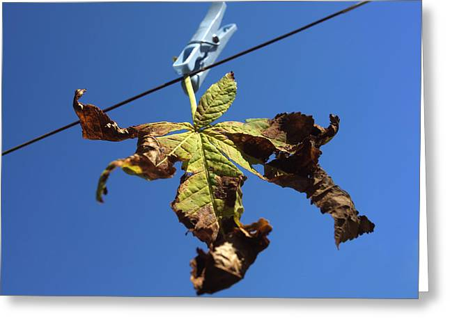 Clothespins Greeting Cards - Leaf and blue sky Greeting Card by Bernard Jaubert